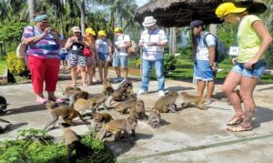 tour đảo khỉ nha trang