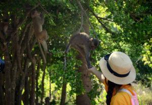 kinh nghiệm đi đảo khỉ nha trang