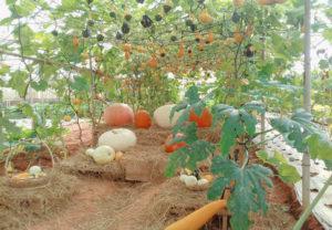 vườn bí ngô đà lạt